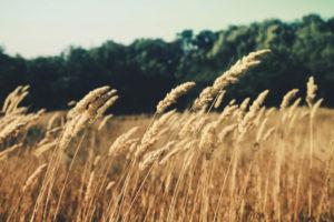 Alimentos sin gluten: salud para todos