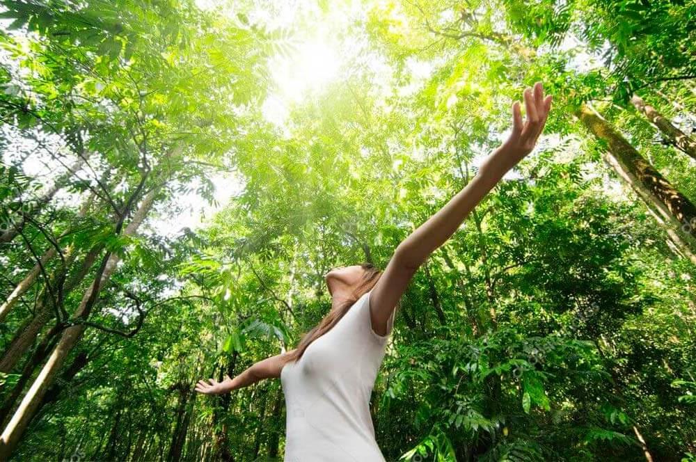 El día 1 de noviembre celebramos el Día Mundial de la Ecología